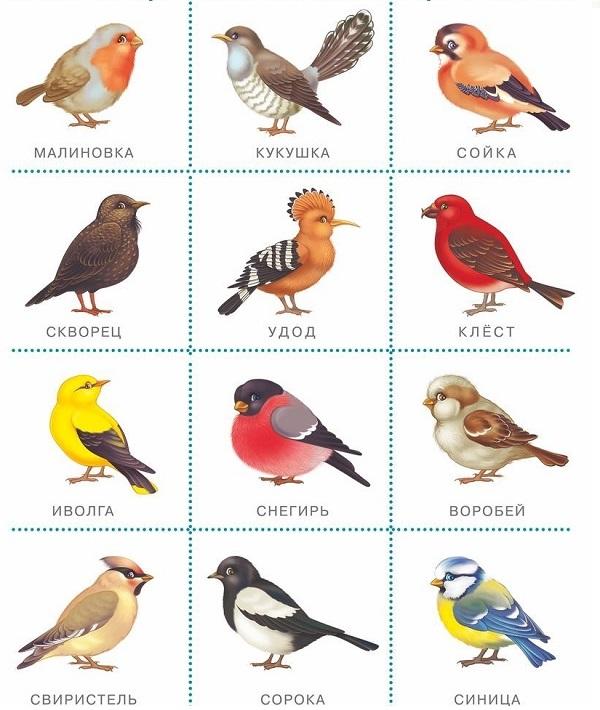 птицы карточка