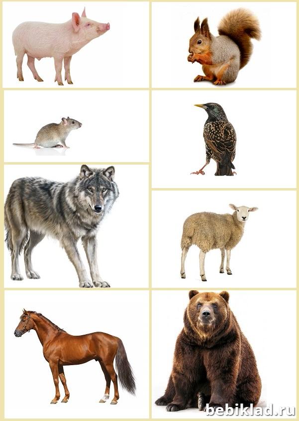 кто где живет животные