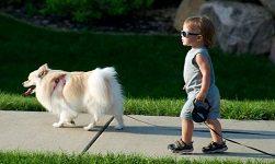Как подготовить ребёнка к прогулке с собакой