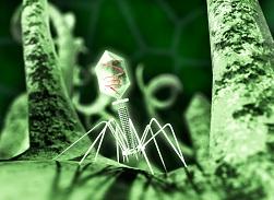 Средства с бактериофагами для детей