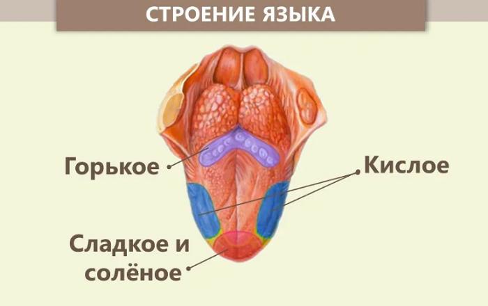 анализатор вкуса язык