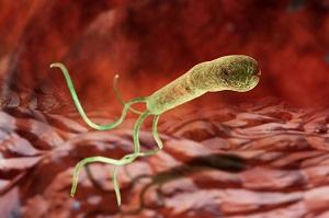 бактерия гастрит