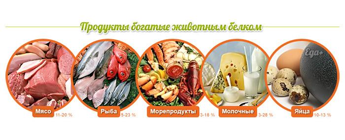 belki_zhivotnogo_proishozhdenyja