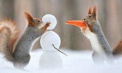 белочка новогодние