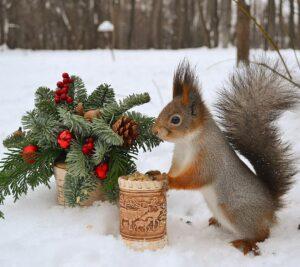 белочка стихи новогодние