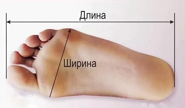 длина стопы и ширина