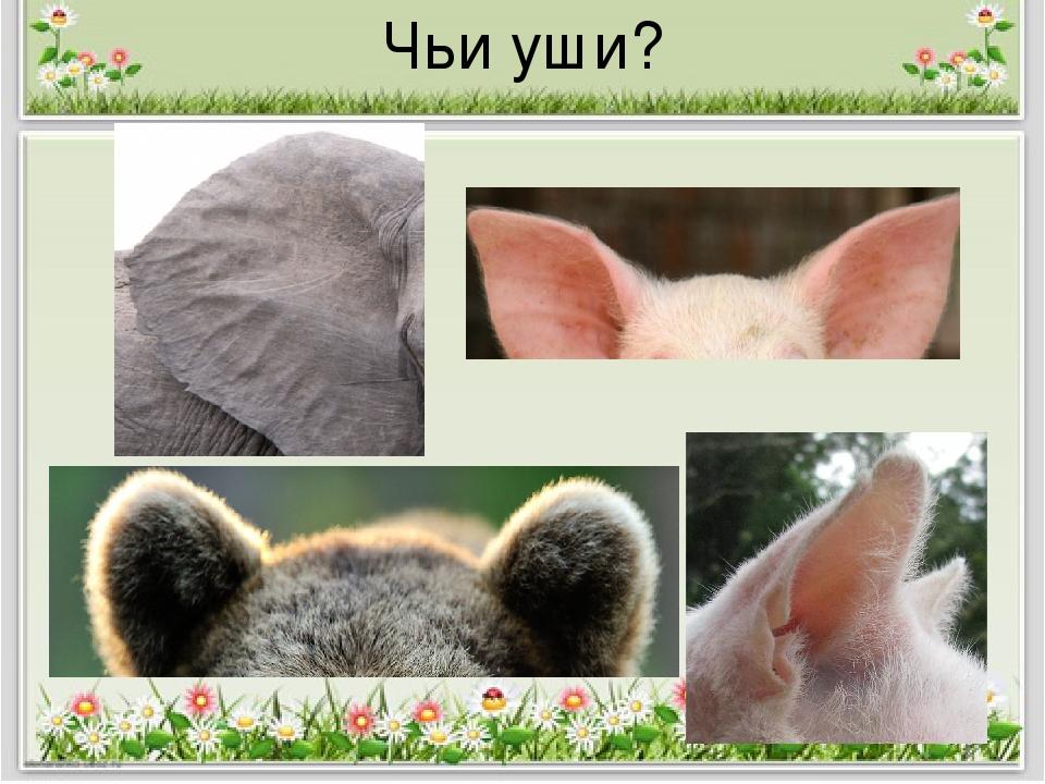чьи ушки