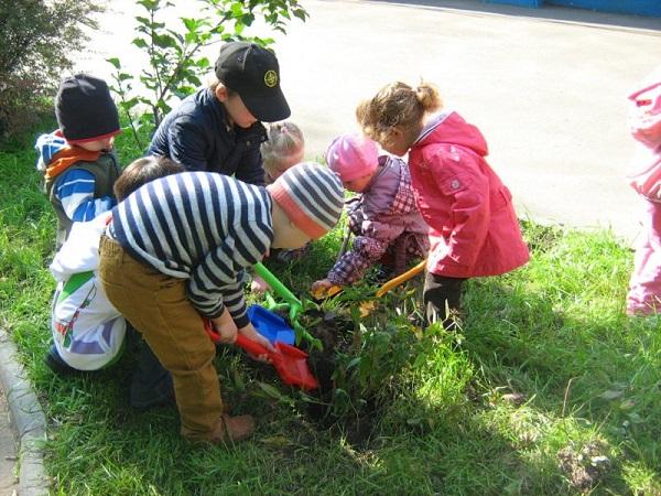 выпускной в детском саду садим деревья