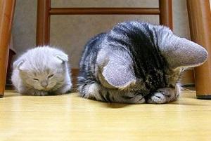 кошка ребенку
