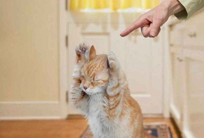 кошку нельзя