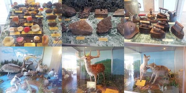 музей природы боровое