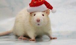 мышь белая новый