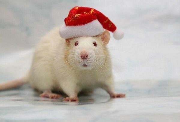 мышь белая новый год