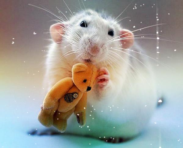 подарок мышка
