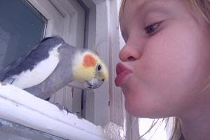попугай и малыш