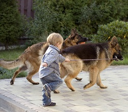 ребенок гуляет с псами