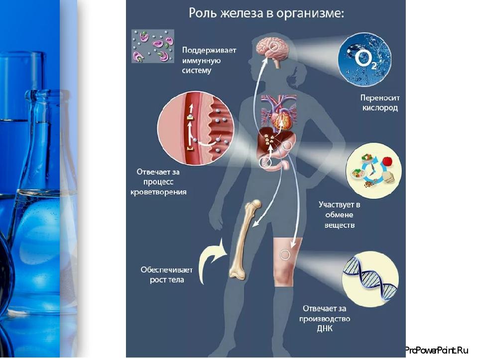роль железа в крови