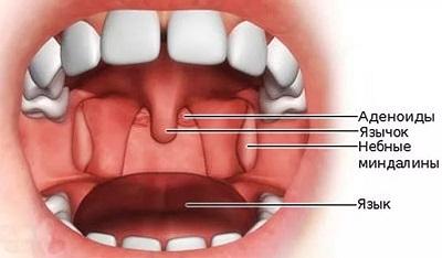 рот миндалины
