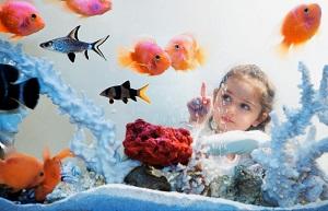рыбки ребенку