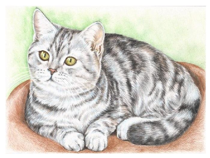 кошка карандаши сказка