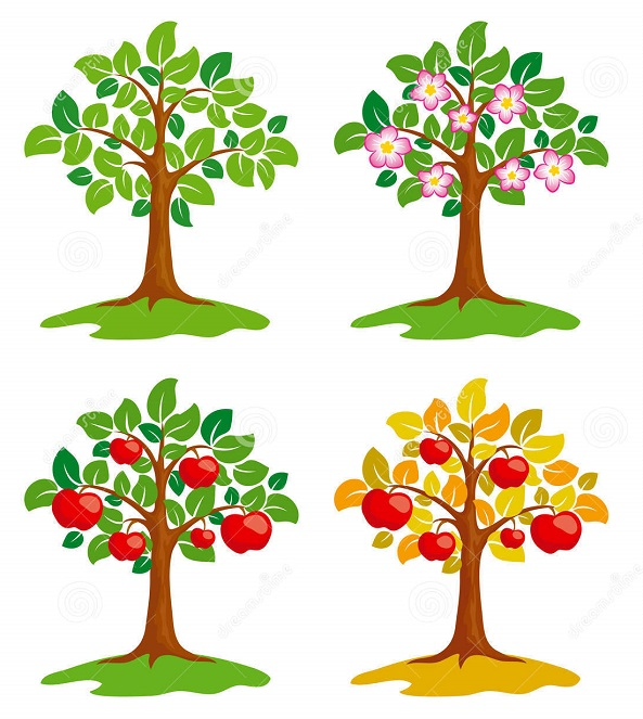 стадии роста дерева