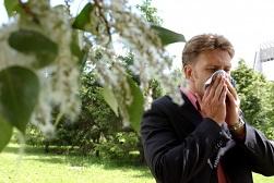 тополиный пух аллергия симптомы