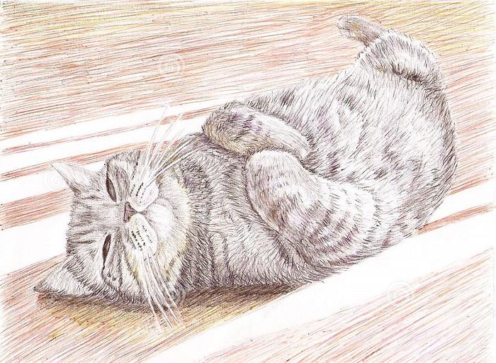 карандаши кошка