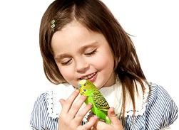 волнистый попугай ребенку