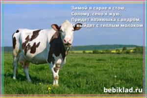 загадки про корову