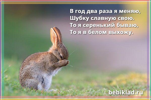 загадки про зайца