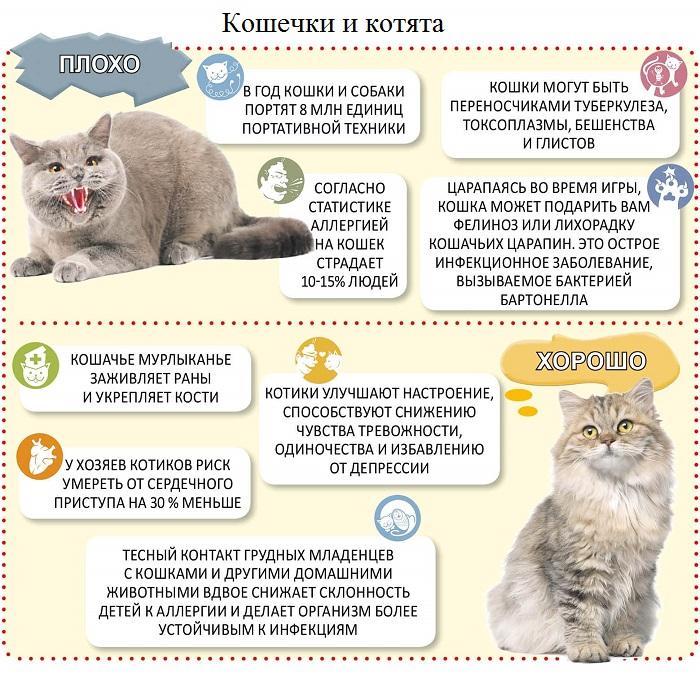 знать о котятах